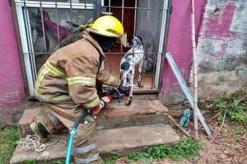 INSÓLITO: Por tercera vez en 2021 debieron llamar a los bomberos porque el perro se queda atascado