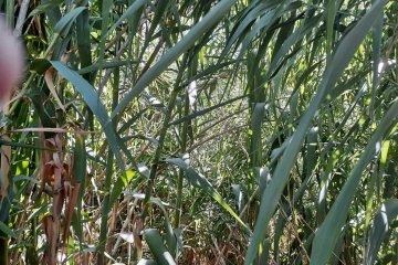 Vecinos piden que el municipio intervenga en un terreno abandonado plagado de ratas y serpientes